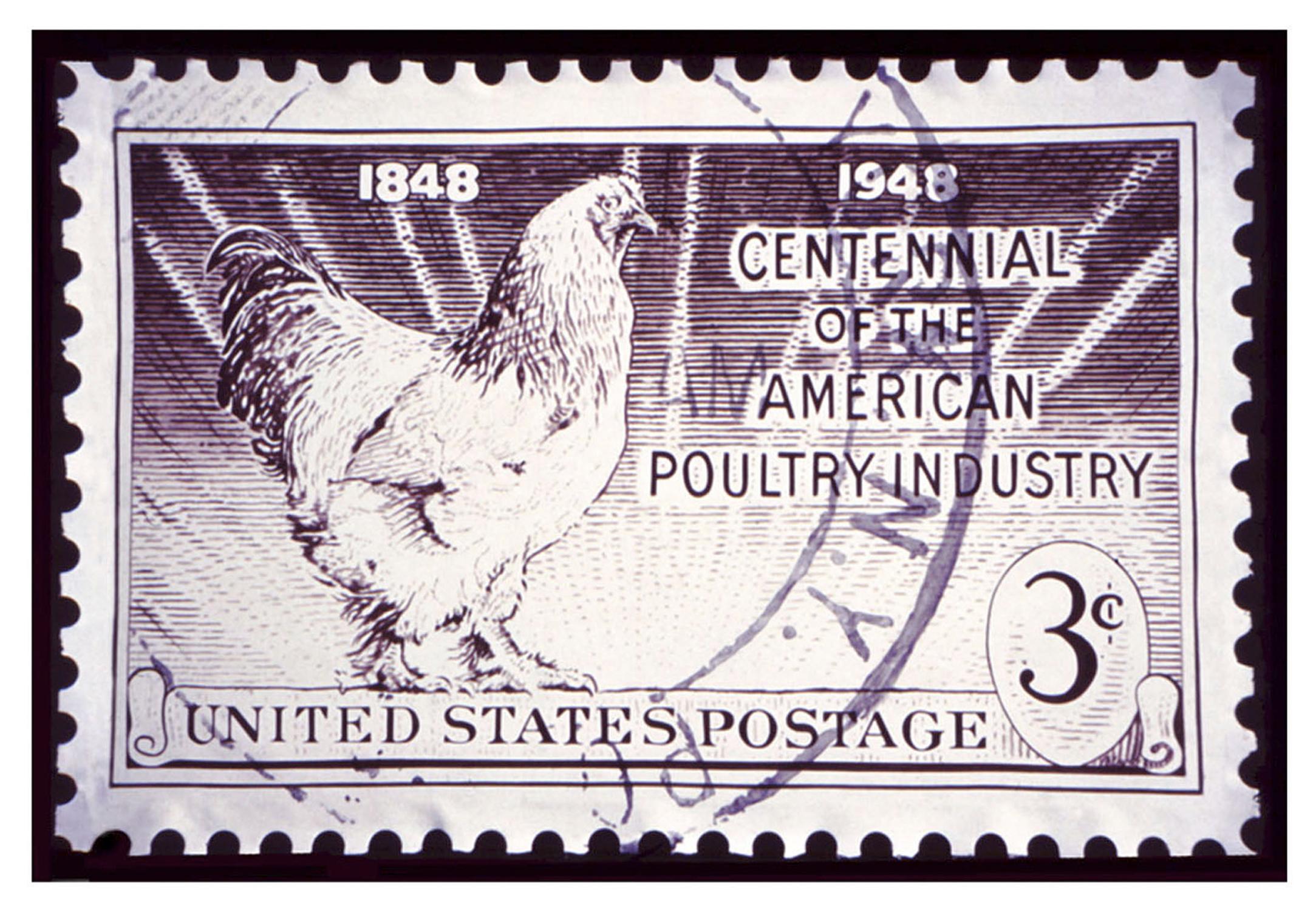 American Poultry @240.jpg