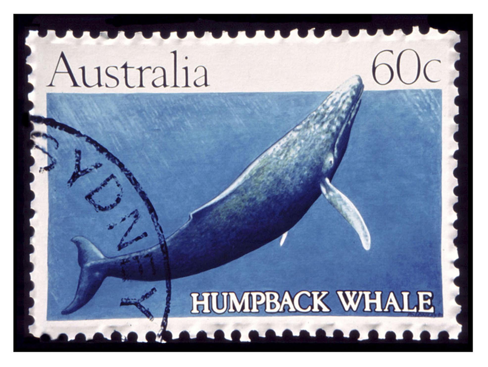 "Australia Humpback Whale, Acrylic on Canvas, 35"" x 48"""