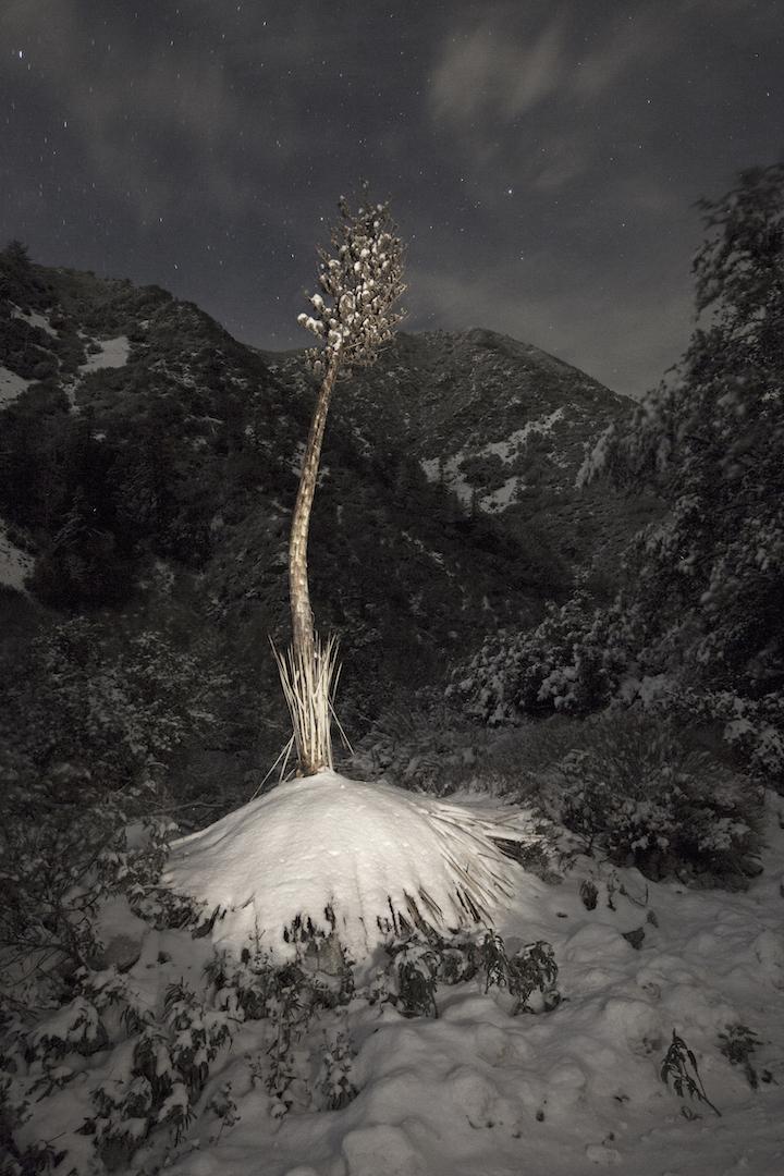 "Century in Snow, Mt. Baldy, Archival Pigment Print on Cotton Fiber, 31"" x 22.5"""