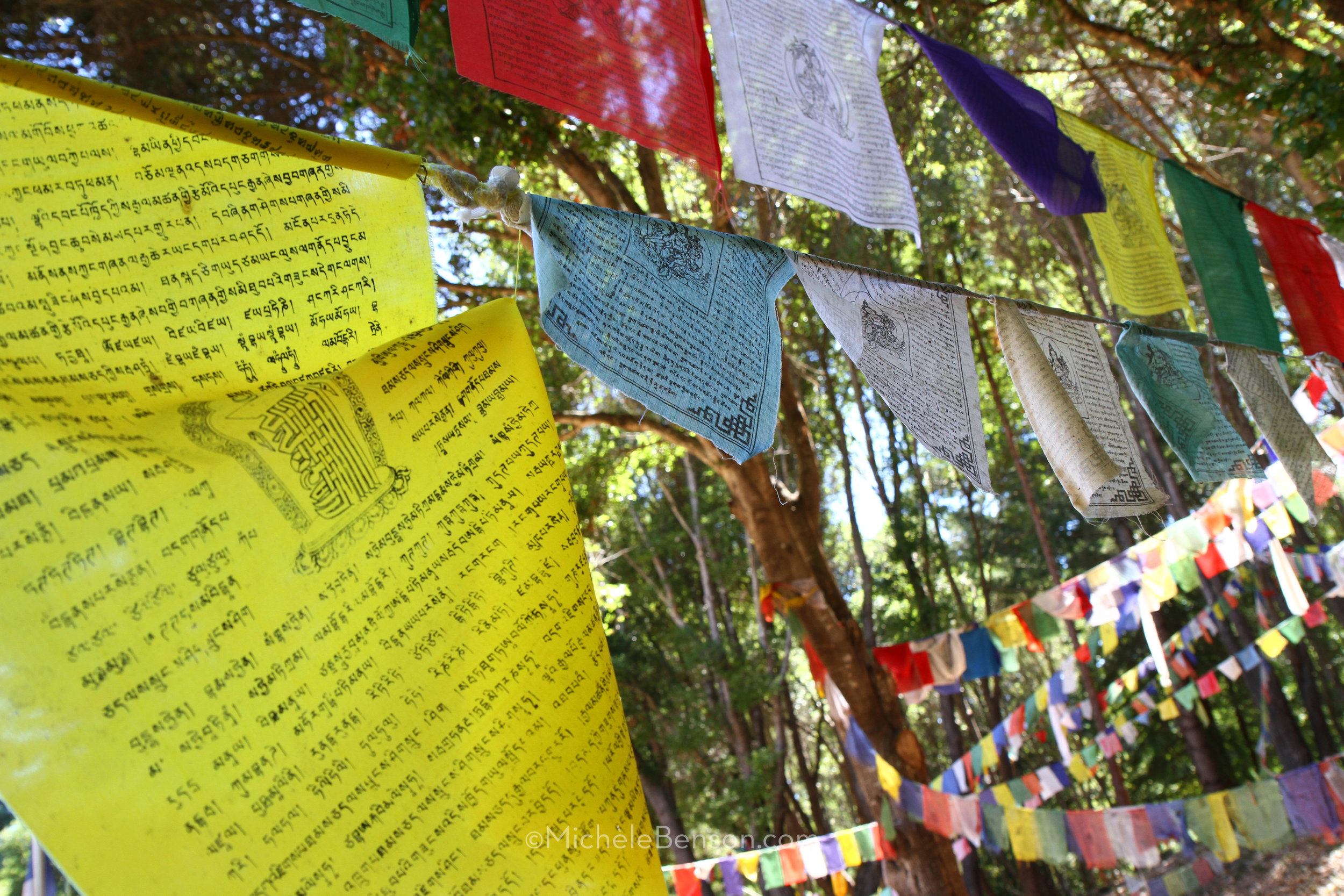 Air Medicine Buddha Prayer Flags 8.0 IMG_2804