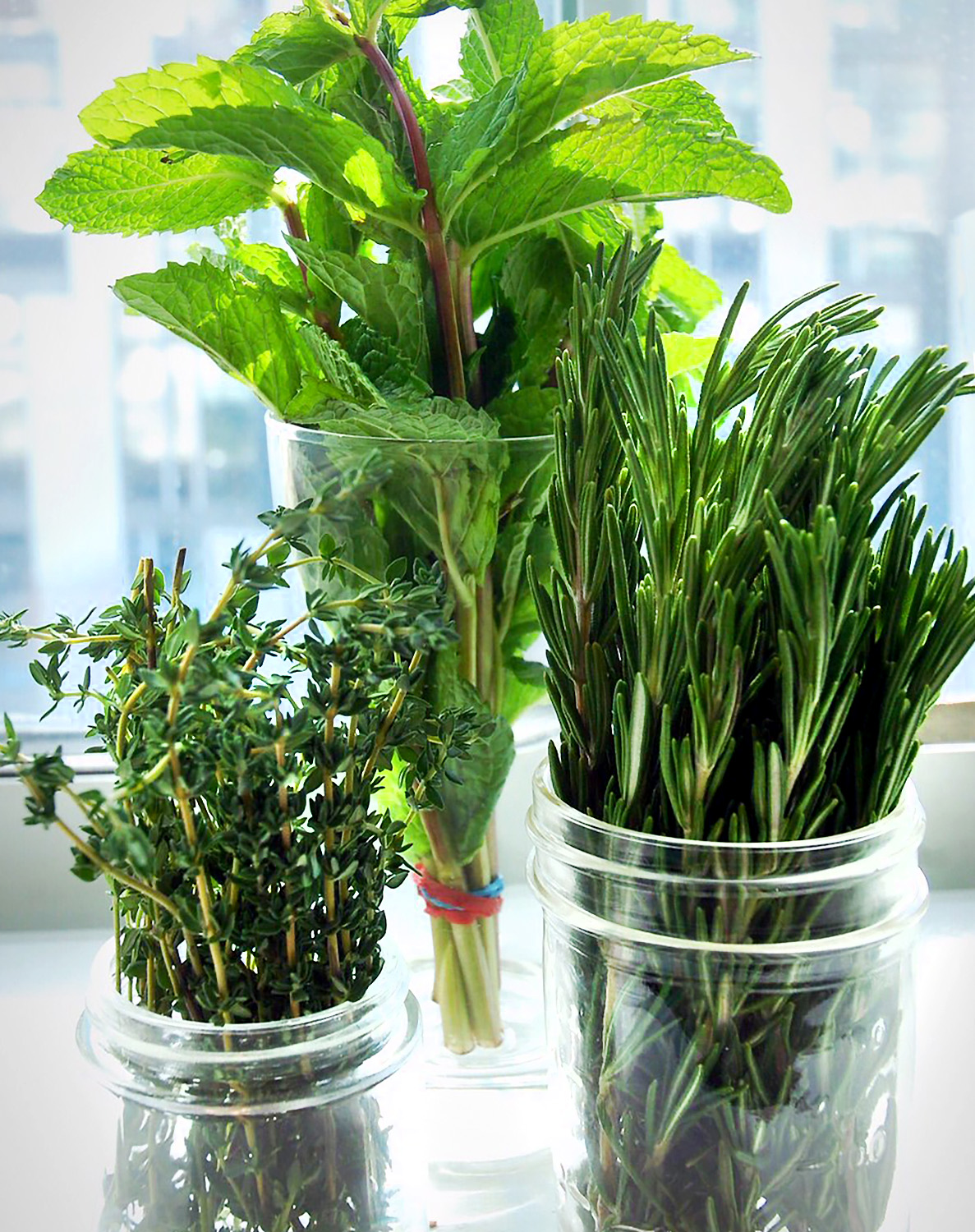 Summer herbs thyme, mint and rosemary in mason jars