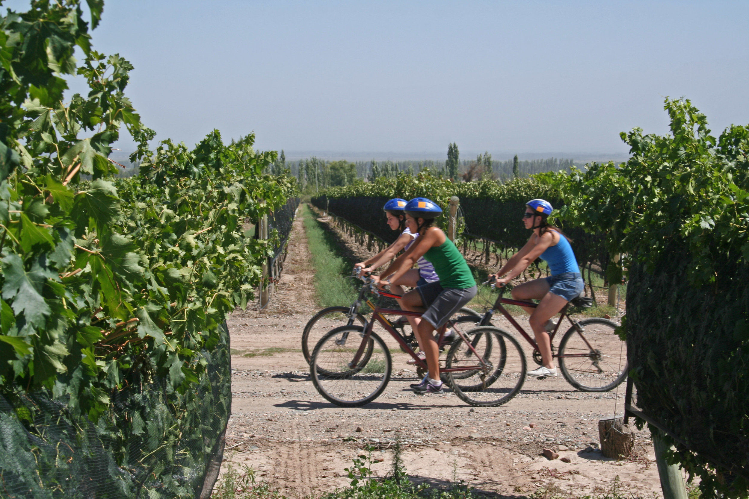 Mendoza Argentine Wine