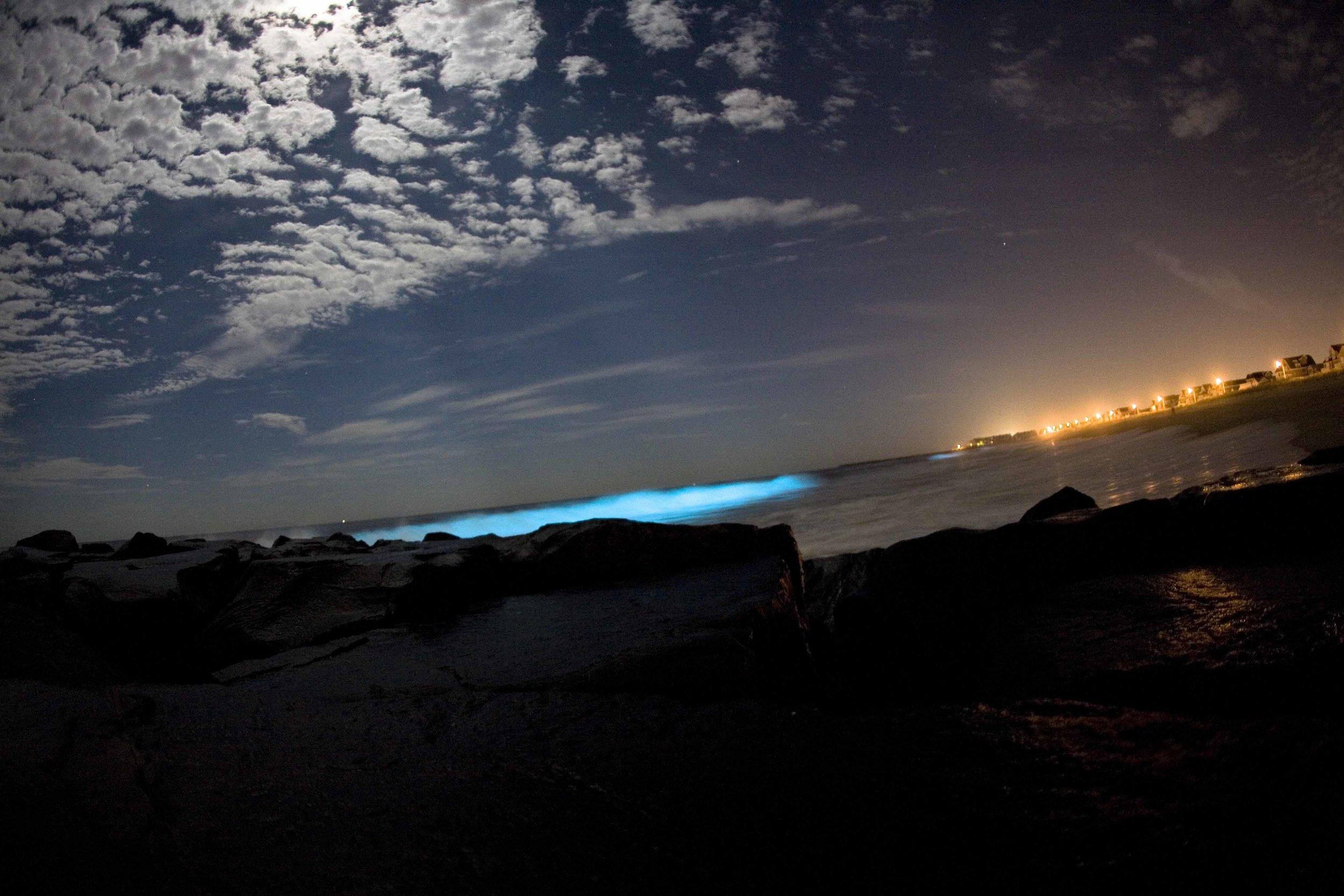 Bioluminescent.jpg