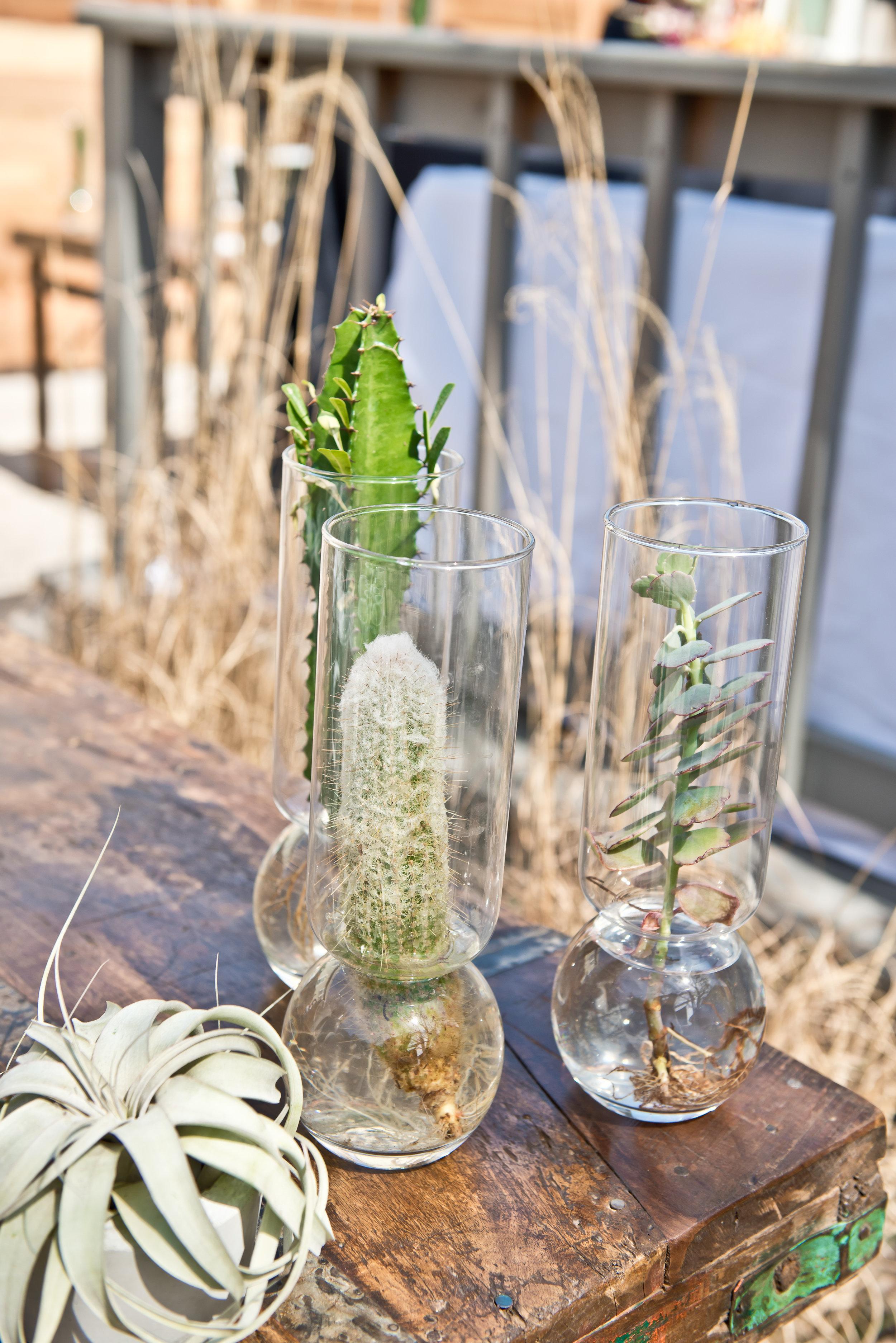 cactus in jar centerpiece