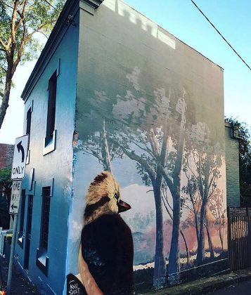 - You'll find this beautiful mural by @knoswetin the Surry Hills hood. Spot this friendly fella on your walk through the city. The word kookaburra is from the Wiradjuri Aboriginal word Guuguuburra, named for its sound of human laughter. Their infamous songs of laughter heard in the morning, before the rain and at dusk are said to bring spiritual healing, warmth and rejuvenation to earth!