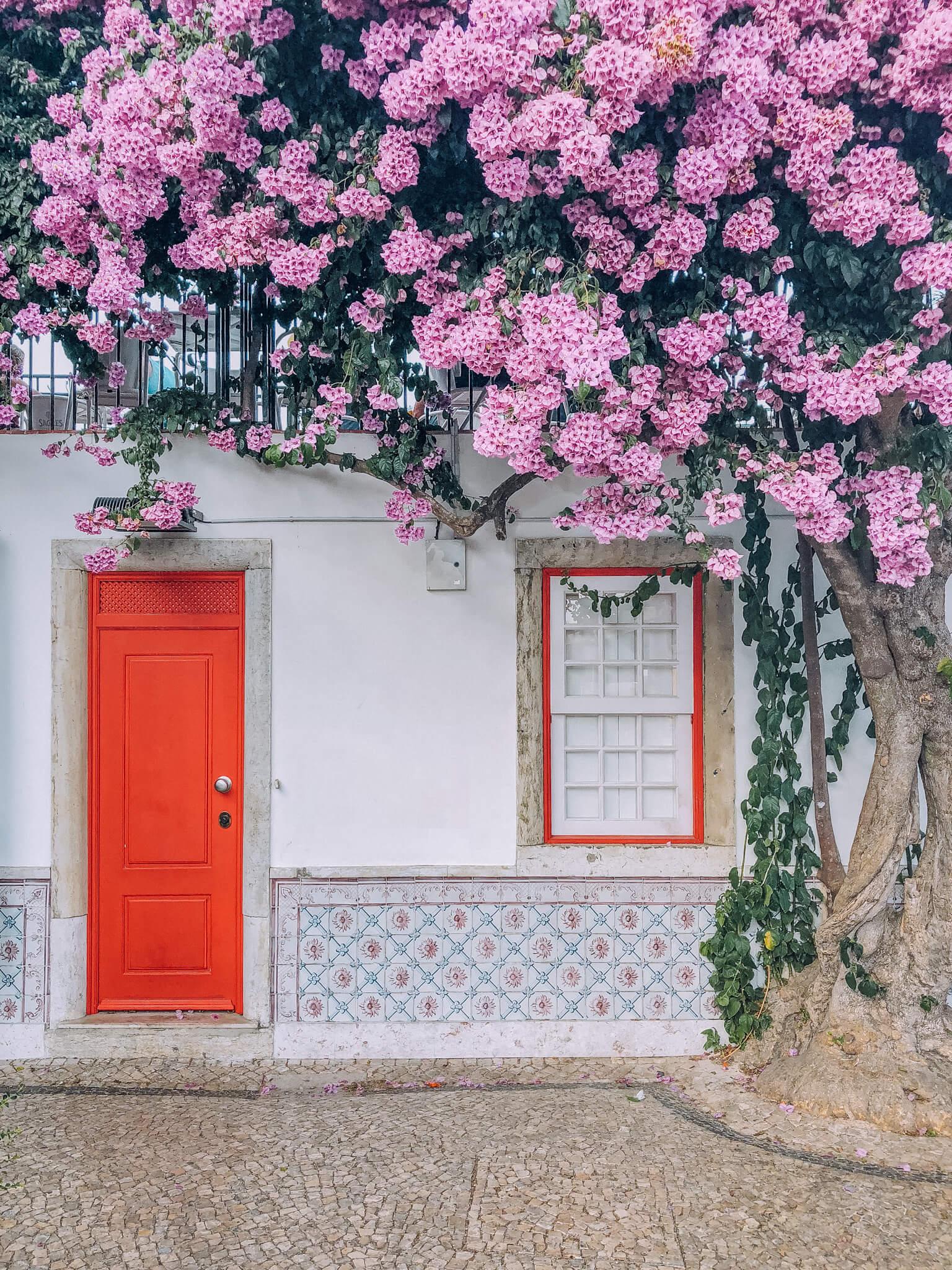 """Attēlu rezultāti vaicājumam """"lisbon wall and flowers"""""""