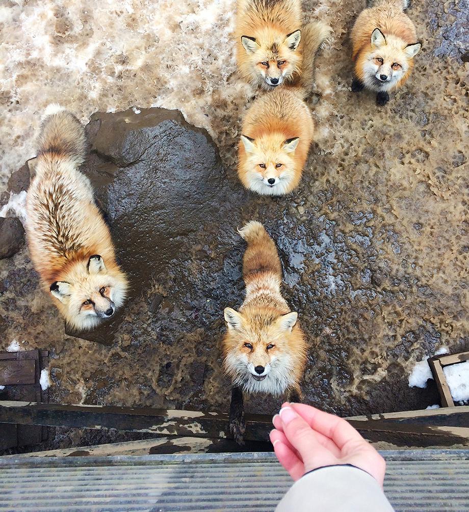 zao-fox-village.jpeg
