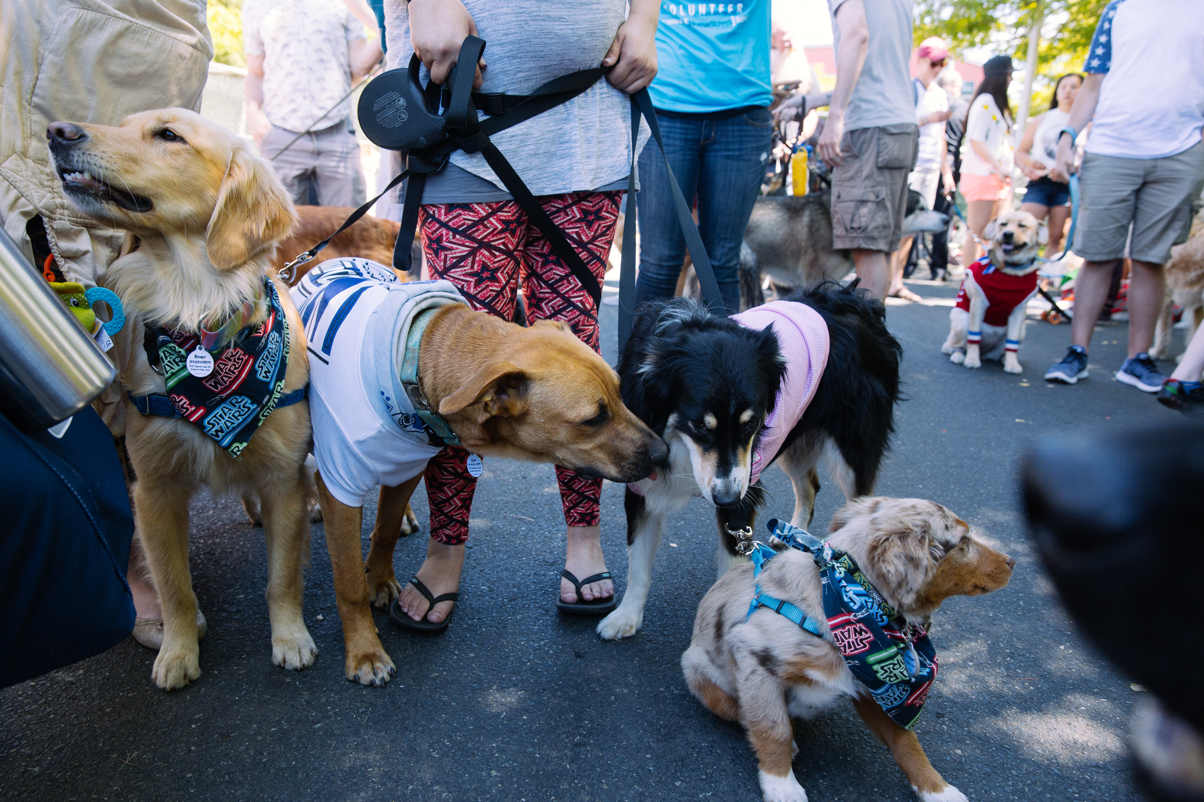 solstice dog parade-13.jpg