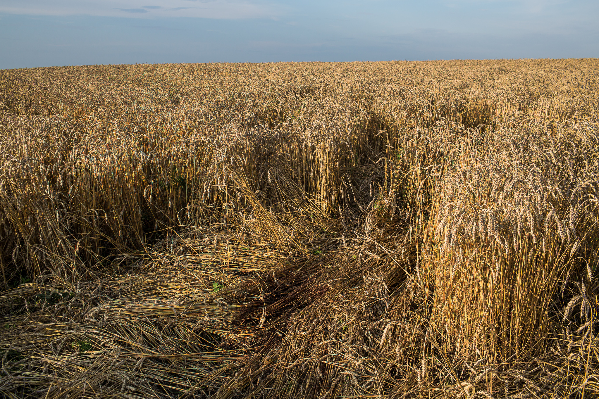 Blood stains the spot in a wheat field where the body of a passenger on Malaysia Airlines flight MH17 landed and was later removed on July 19, 2014 in Grabovo, Ukraine. The flight was traveling from Amsterdam to Kuala Lumpur when it crashed killing all 298 on board including 80 children. The aircraft was allegedly shot down by a missile and investigations continue over the perpetrators of the attack.