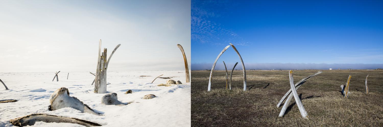 Whale bones in Point Hope, Alaska in June 2015.
