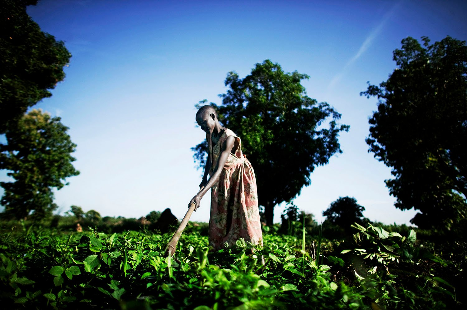 A woman tends to her garden in the fertile lands along the southern border with Uganda. The tribes in the deep south are agriculturalists and differ significantly in collective personality from the semi-nomadic pastoralists of central southern Sudan. Some in the deep south believe that their region should receive their own form of independence. There is great tension between the deep southern, agricultural tribes and the Dinkas, the region's largest and most powerful group. Dinka's moved to the deep south in large numbers after they liberated those areas during the war. They expropriated land belonging to the native tribes, an issue that generated tremendous resentment.