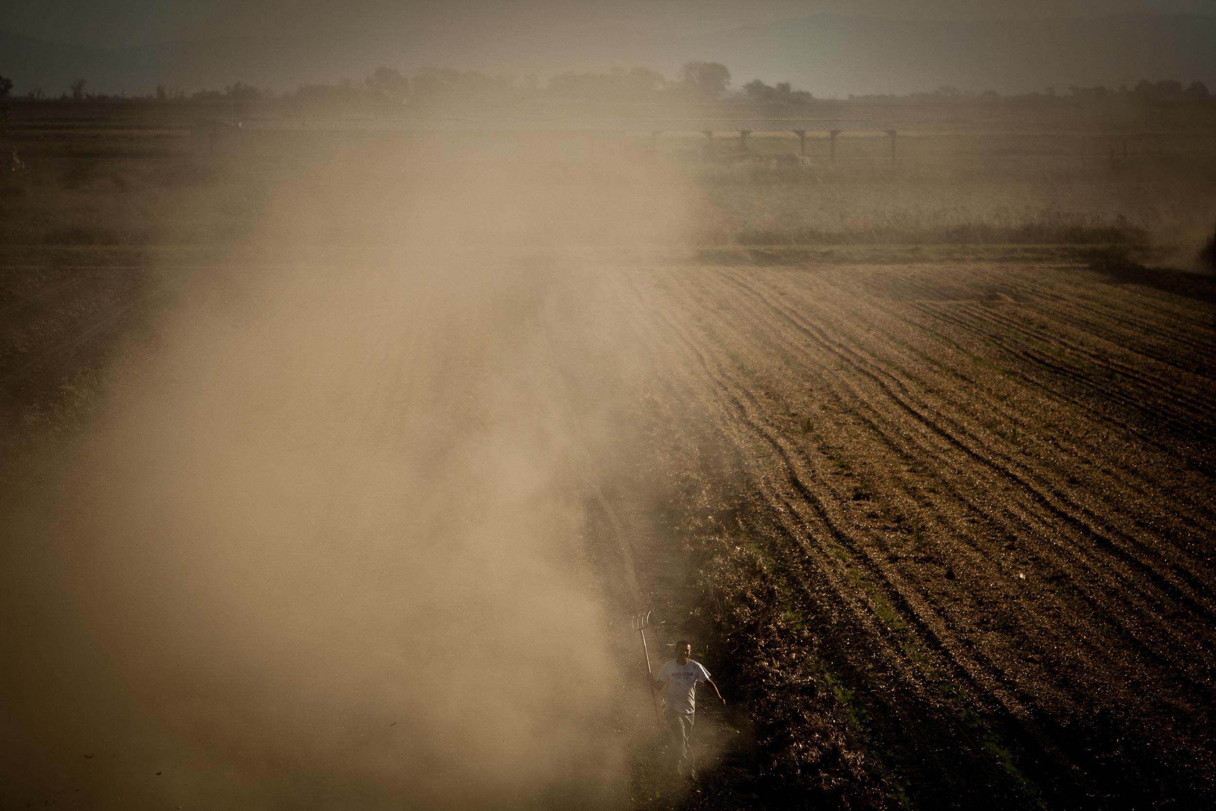 Farmworkers harvest corn silage on Brannan Island in California's Delta.