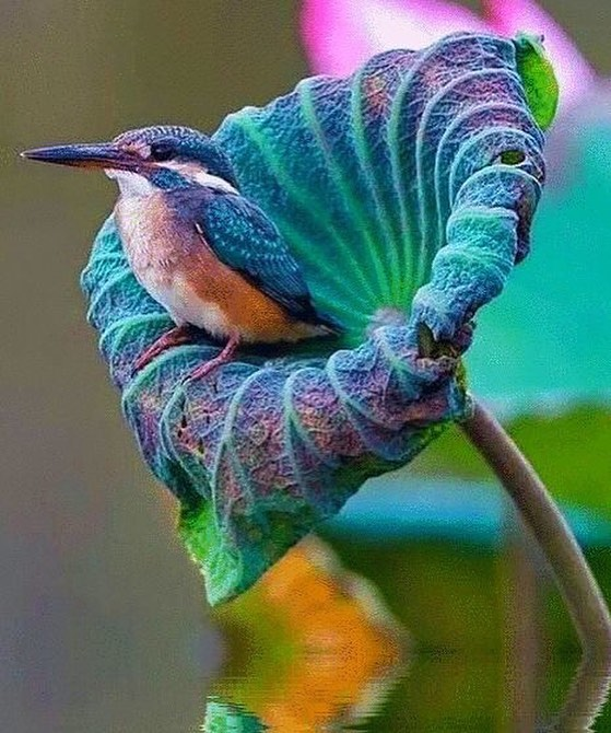Incredible bird !!! #plumedepanache