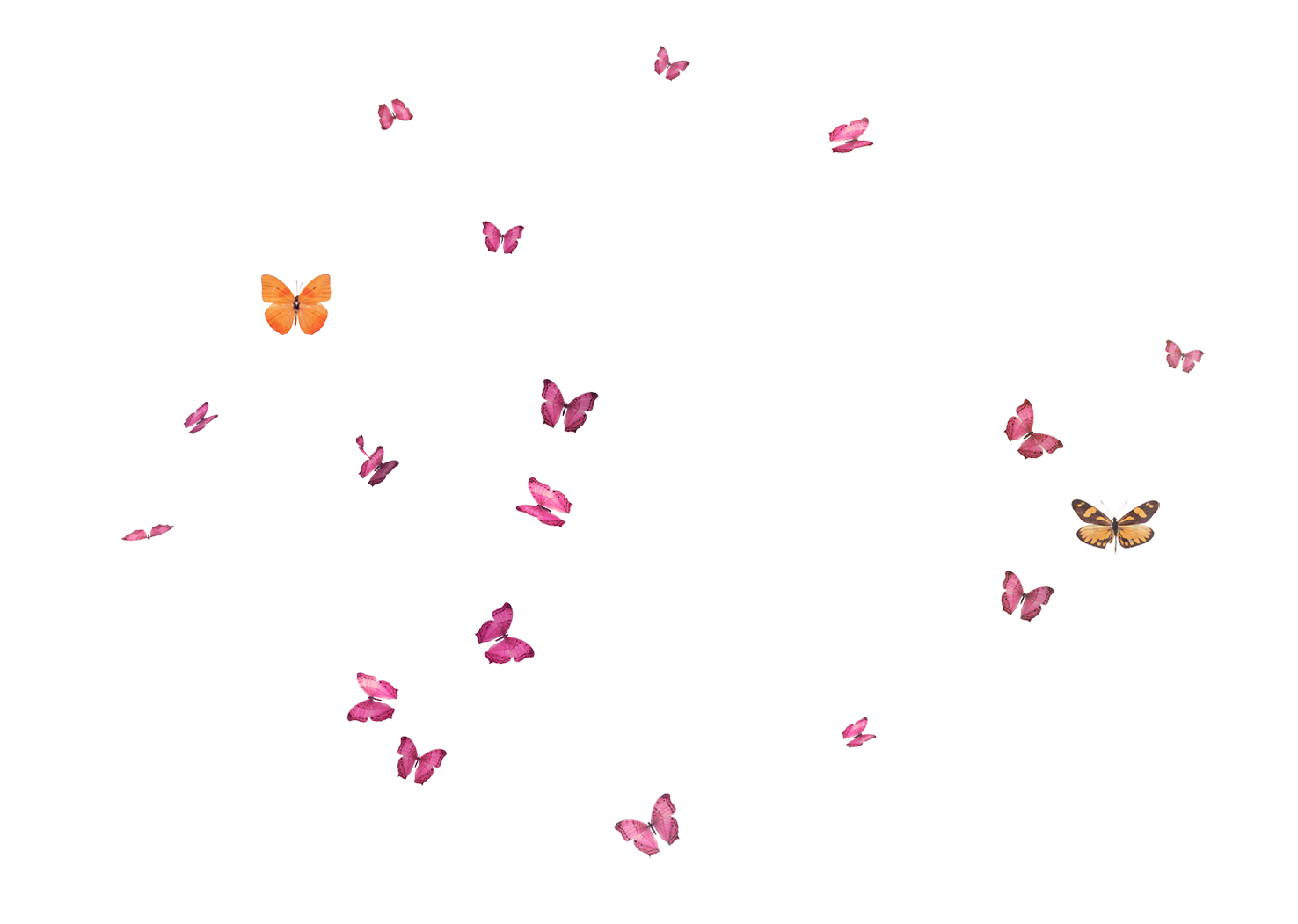 kisspng-butterfly-flight-flying-butterfly-5a87e1f4b599d0.0130056715188546447439.png