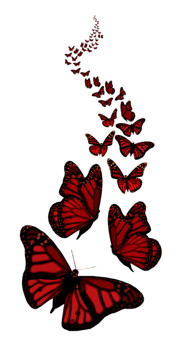 butterflies-transparent-background-5.png