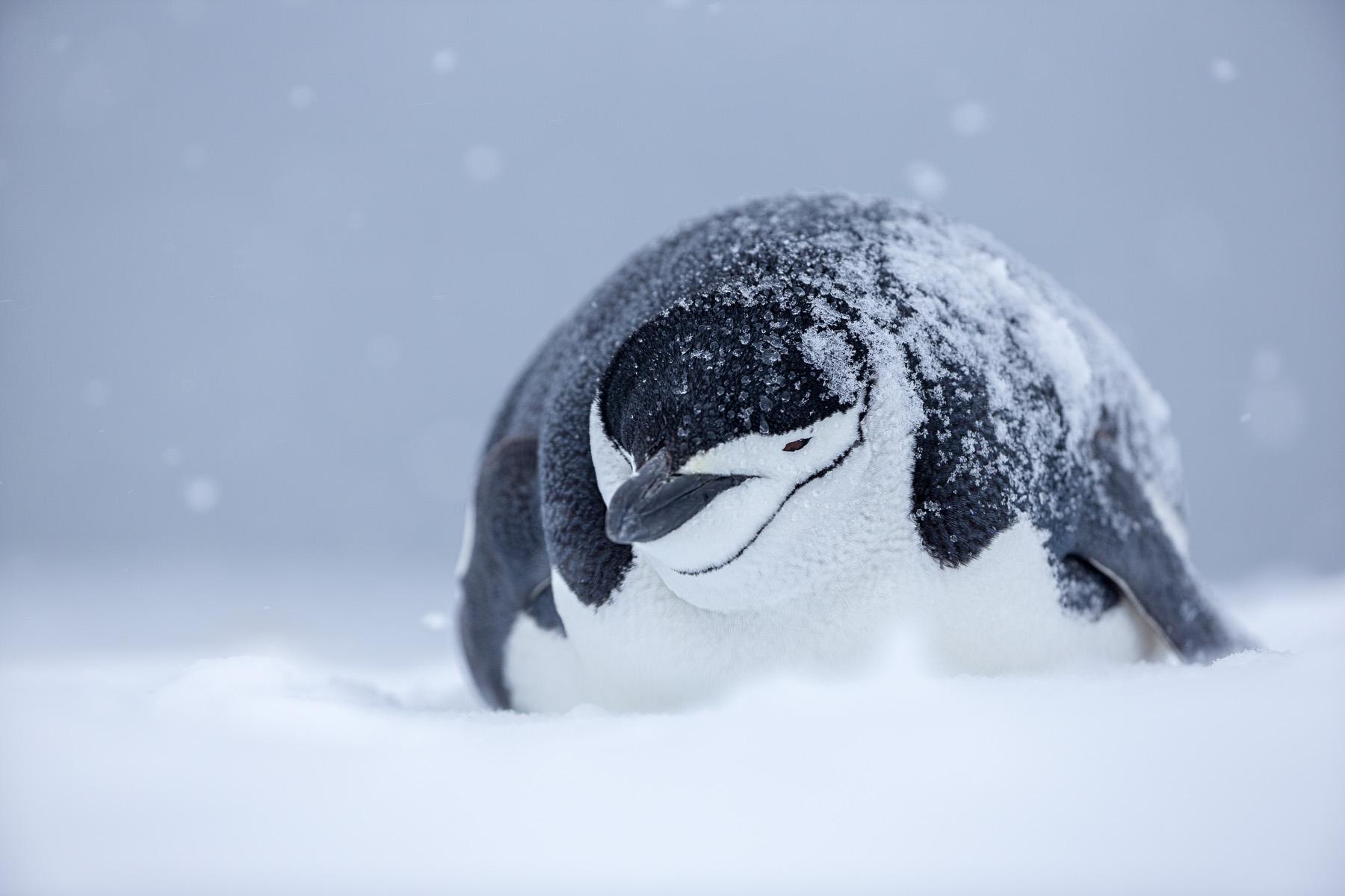 Joshua Holko - Polar Photographer