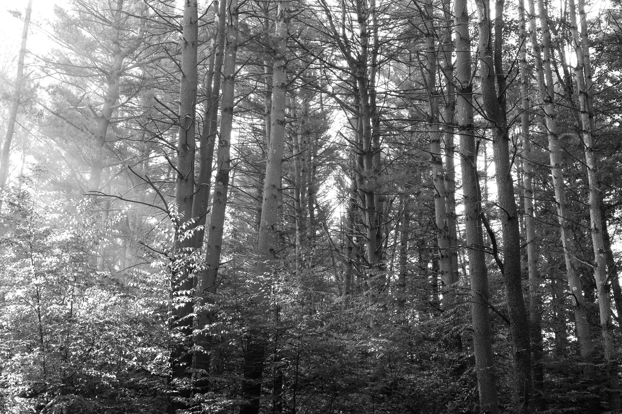 one of the very few images taken while camping in allegheny