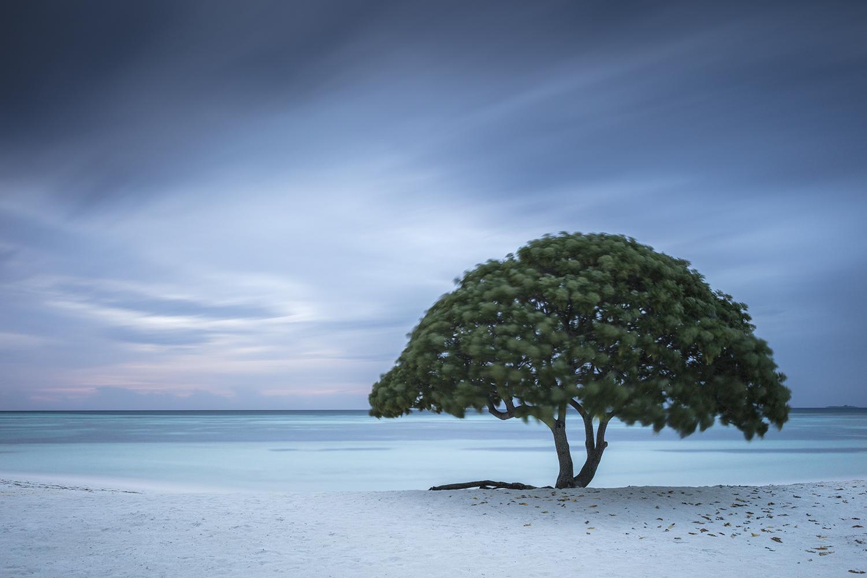 Anthony Lamb - Fine Art Photography