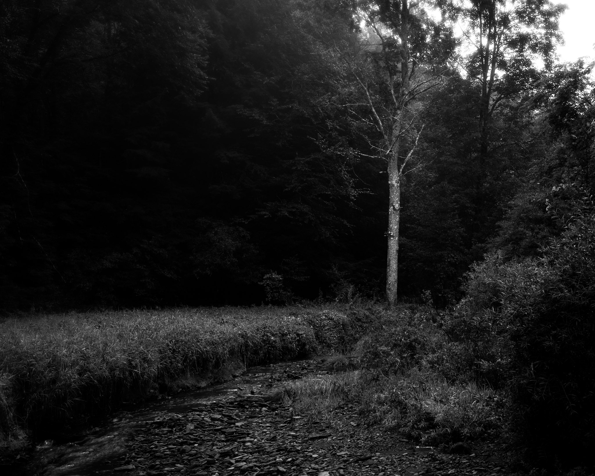 A high-contrast black and white photograph taken by fine artist Cody Schultz while exploring a state park in northern Pennsylvania back in August of 2017. This photograph highlights a tree standing apart from the rest of the forest behind it, a strong ray of light bringing it out amongst the blackened forest behind it.