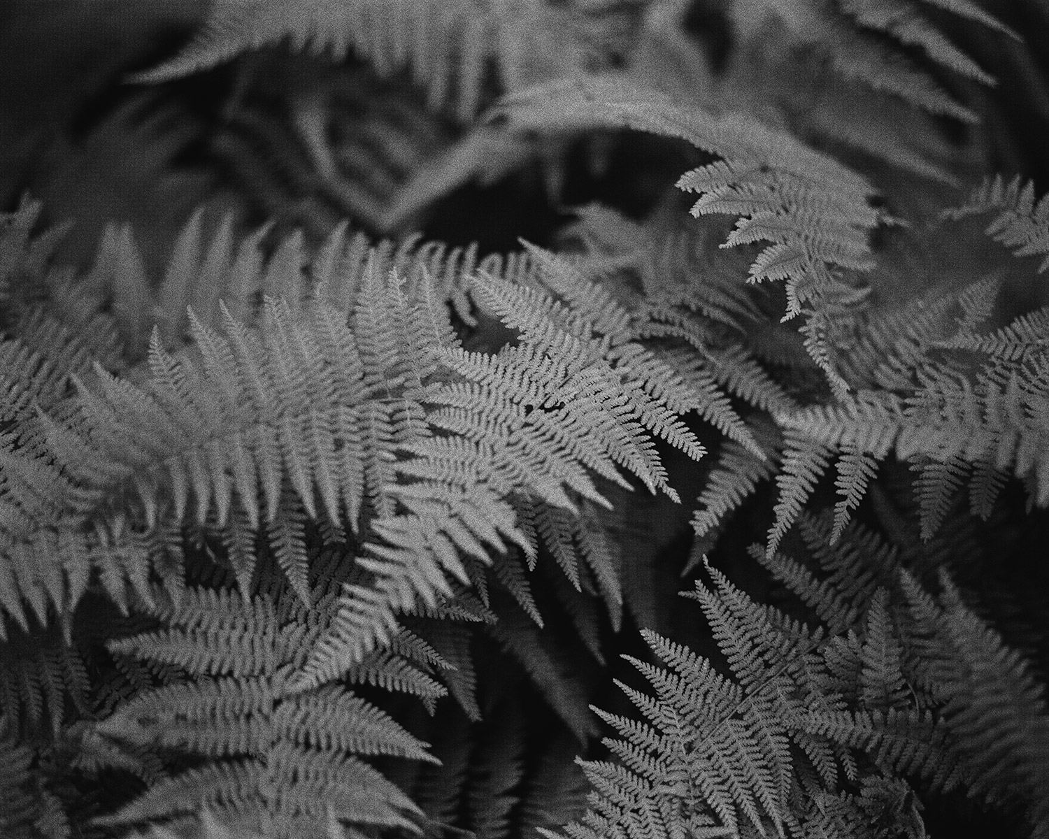 Upon-The-Forest-Floor---Drum-Scan.jpg
