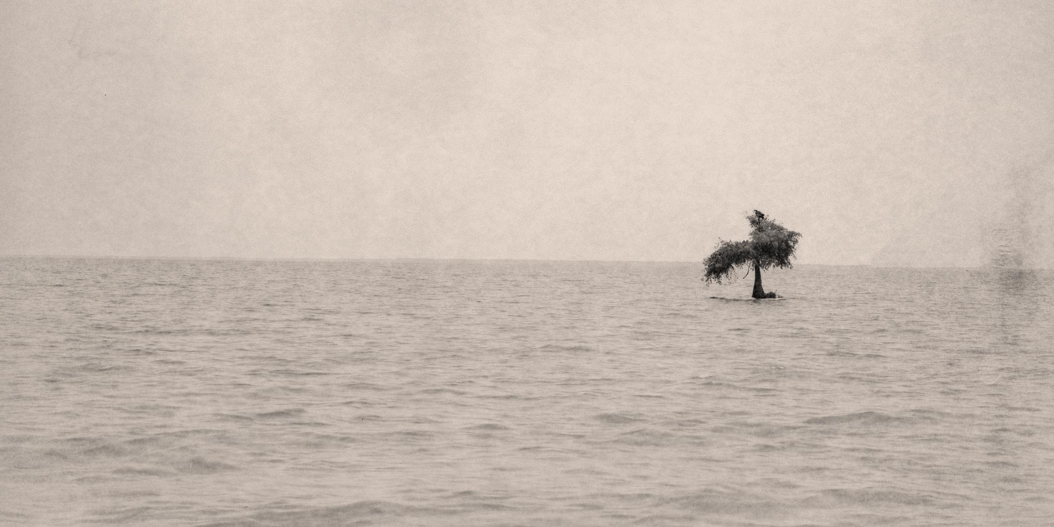 Lonely Waters.jpg
