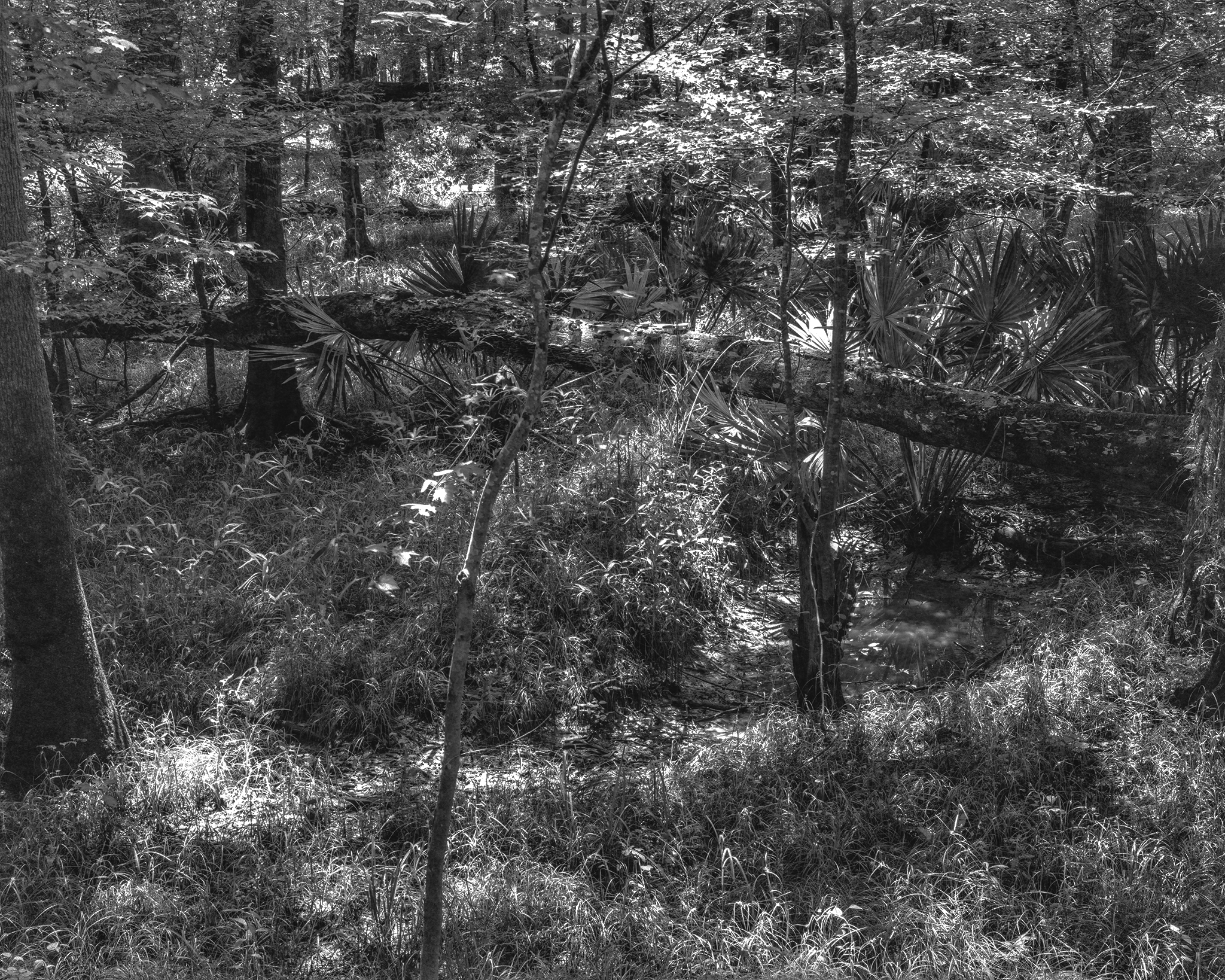 The Hidden Path.jpg