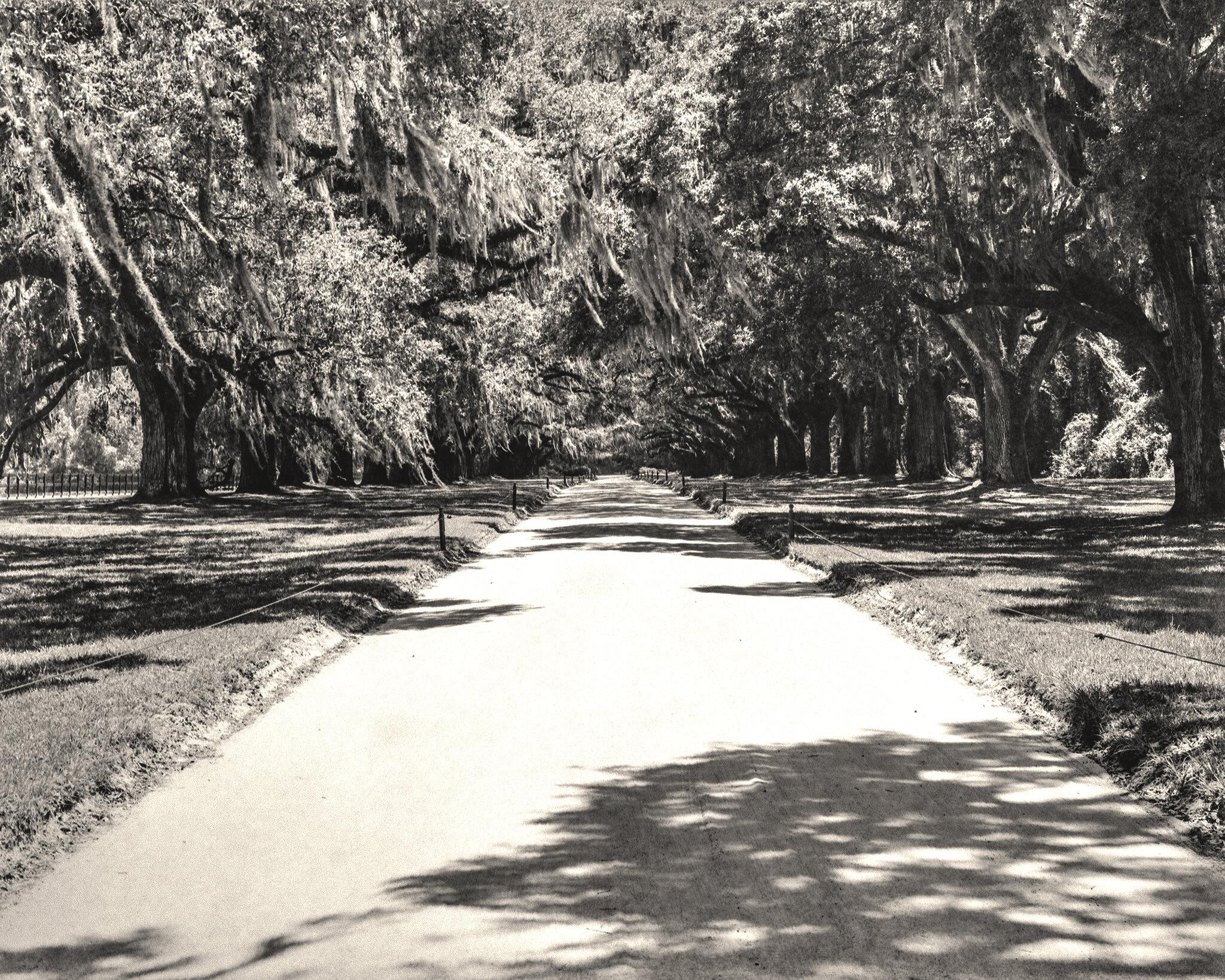 Avenue of Oaks.jpg