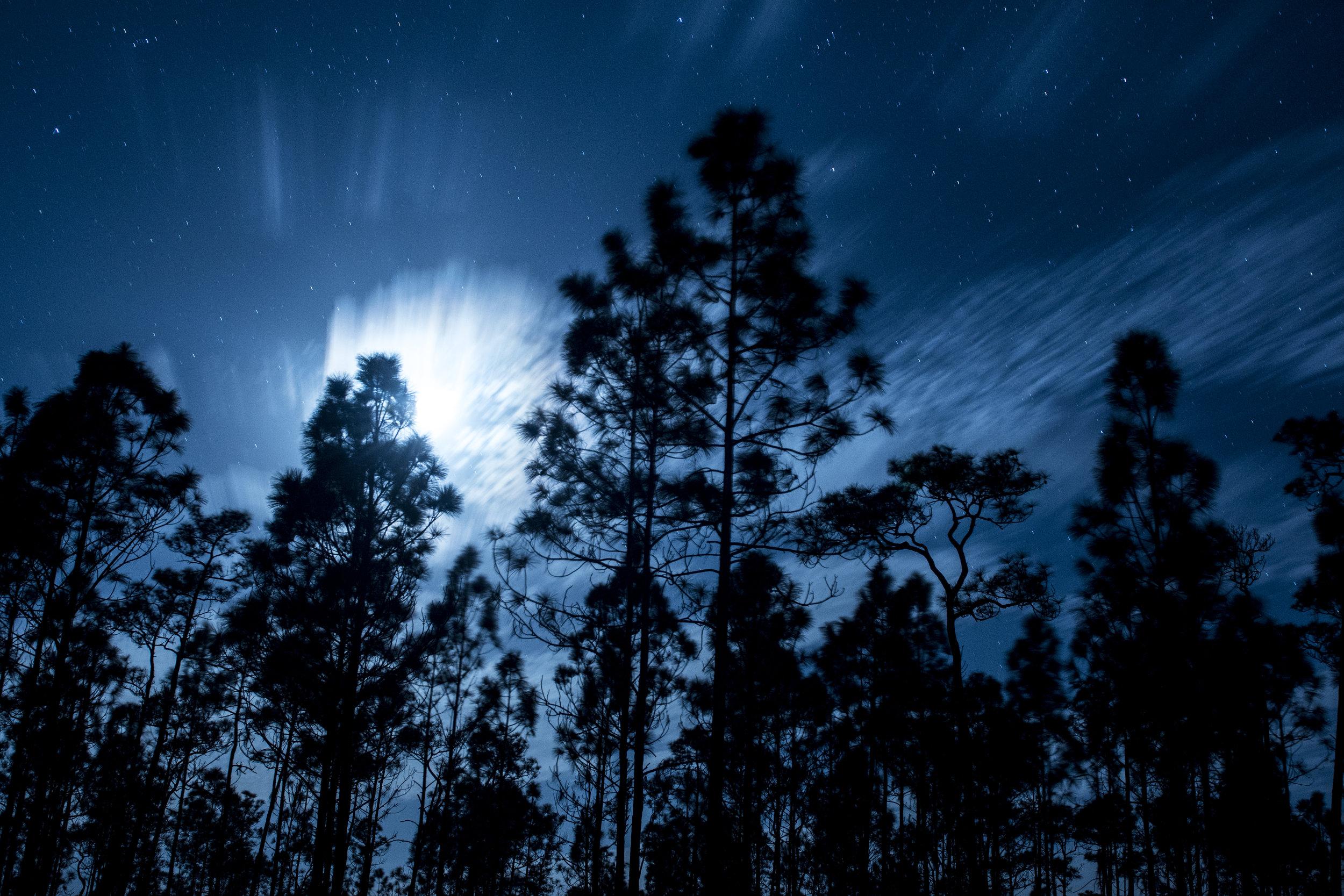 Everglades National Park I