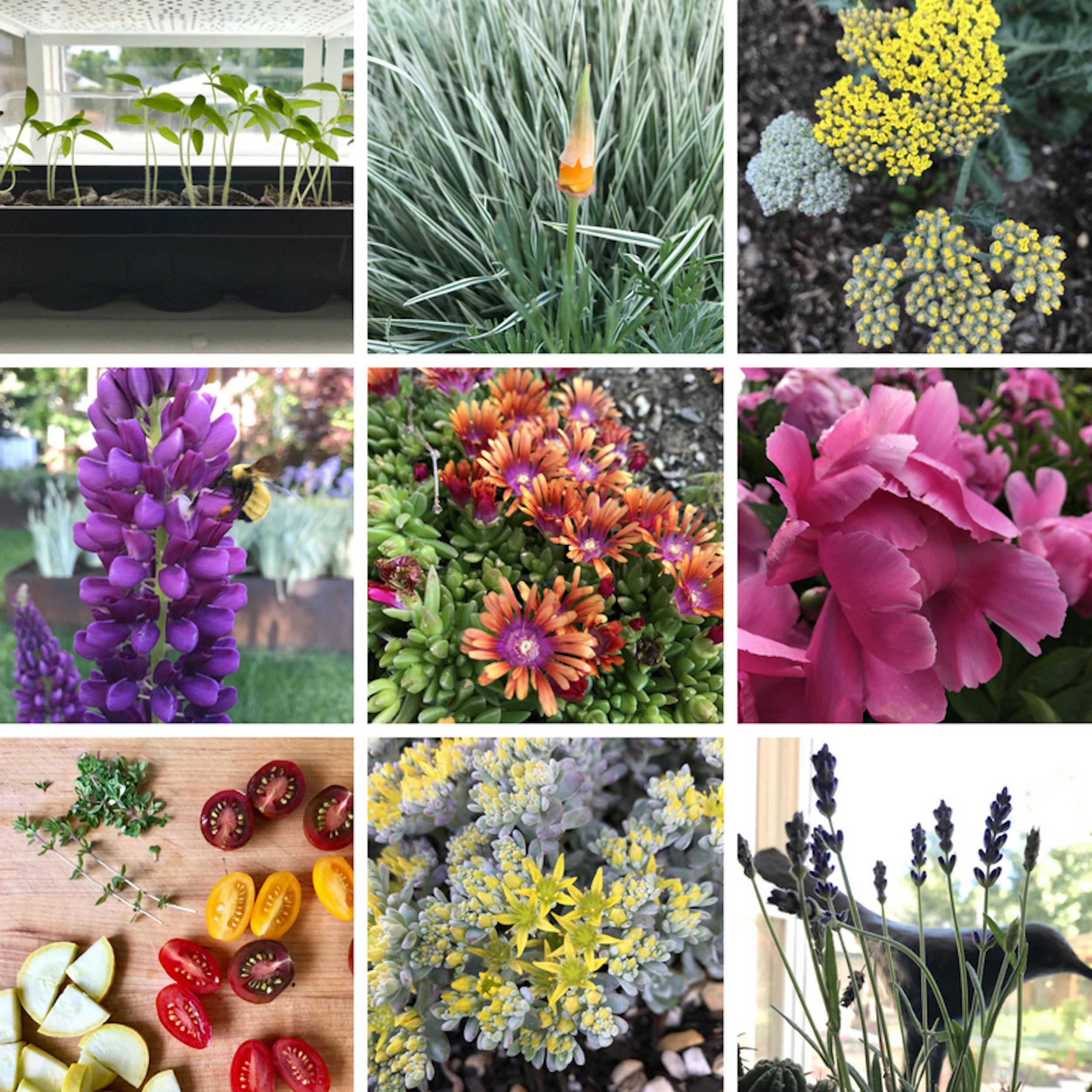 forage may 26.jpg