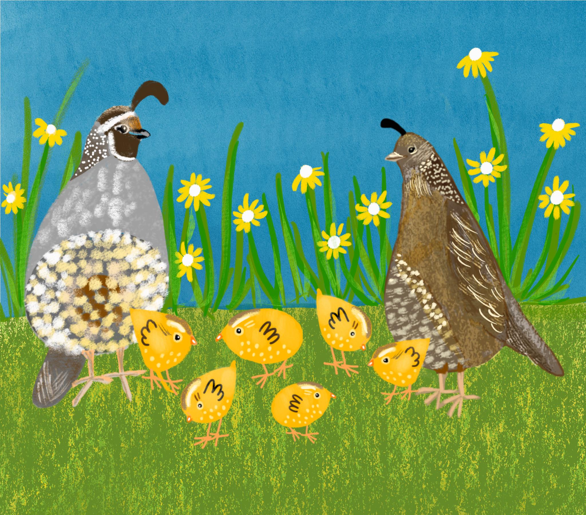 quail.png
