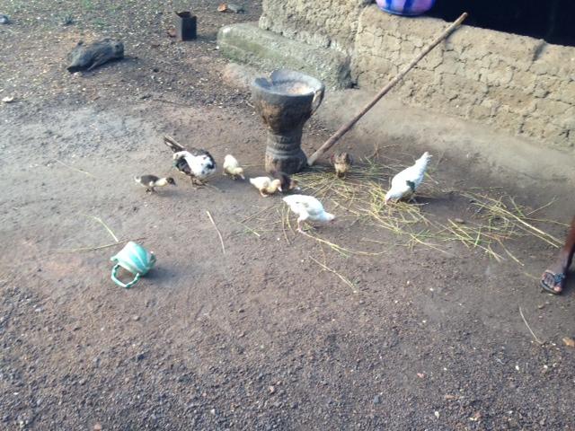 Golu-Mortar-Chickens.jpg