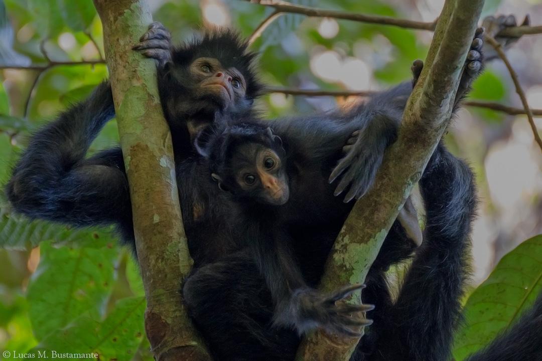 Fauna - Mammals - Lucas Bustamante (21).jpg