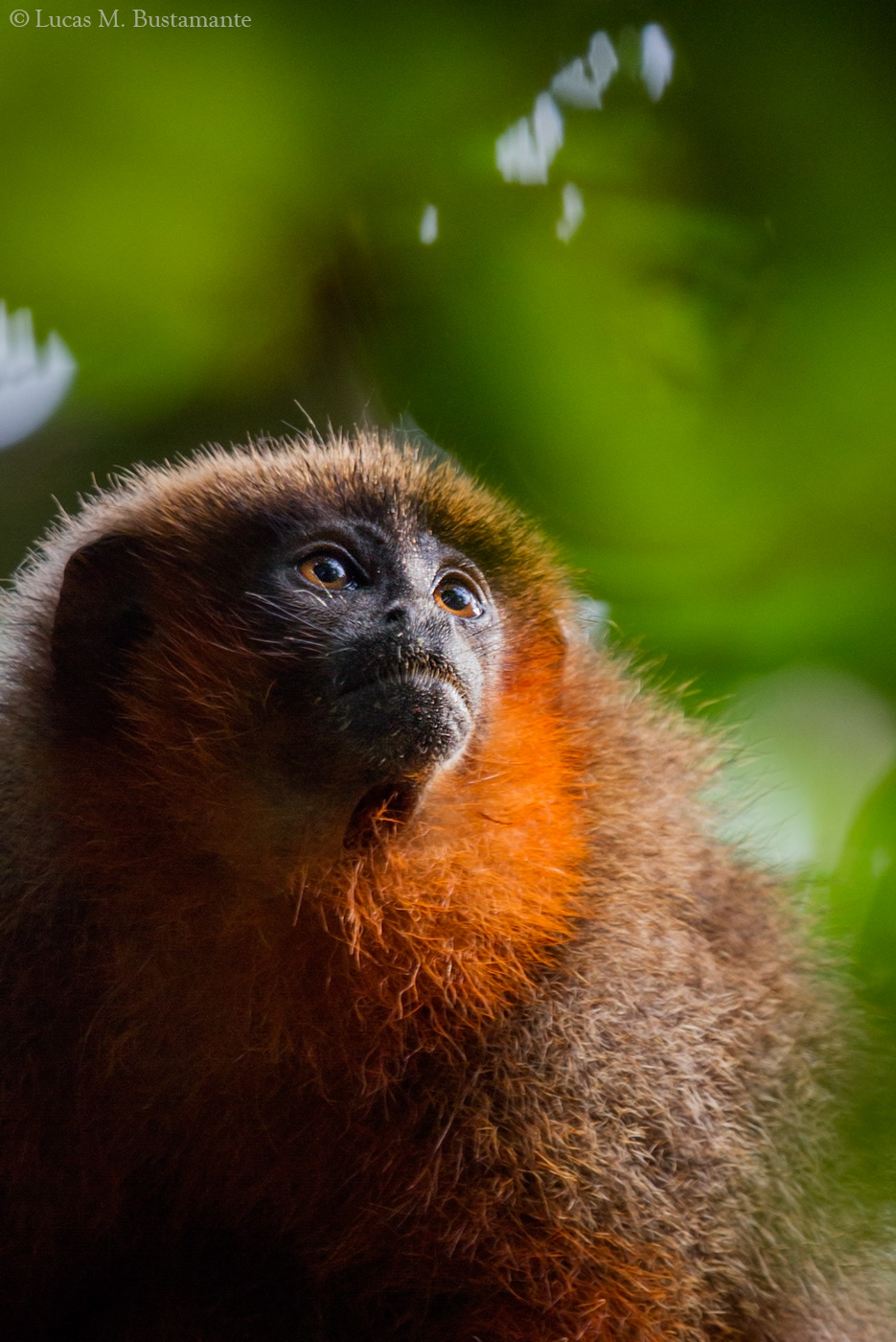Fauna - Mammals - Lucas Bustamante (5).jpg