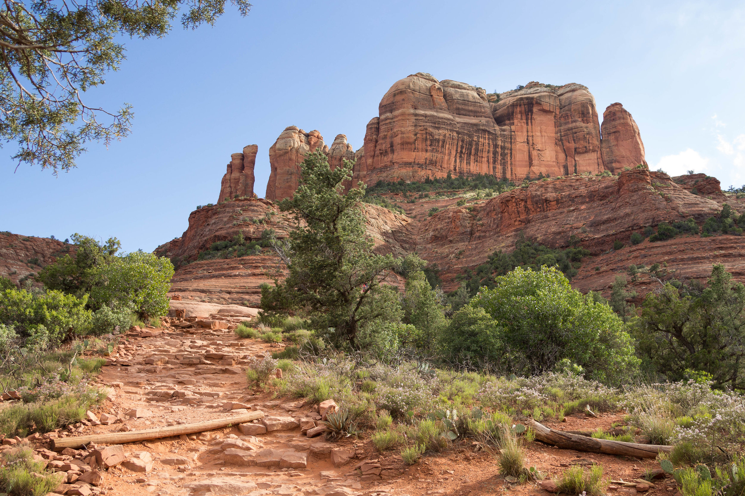 Looking up at Cathedral Rock
