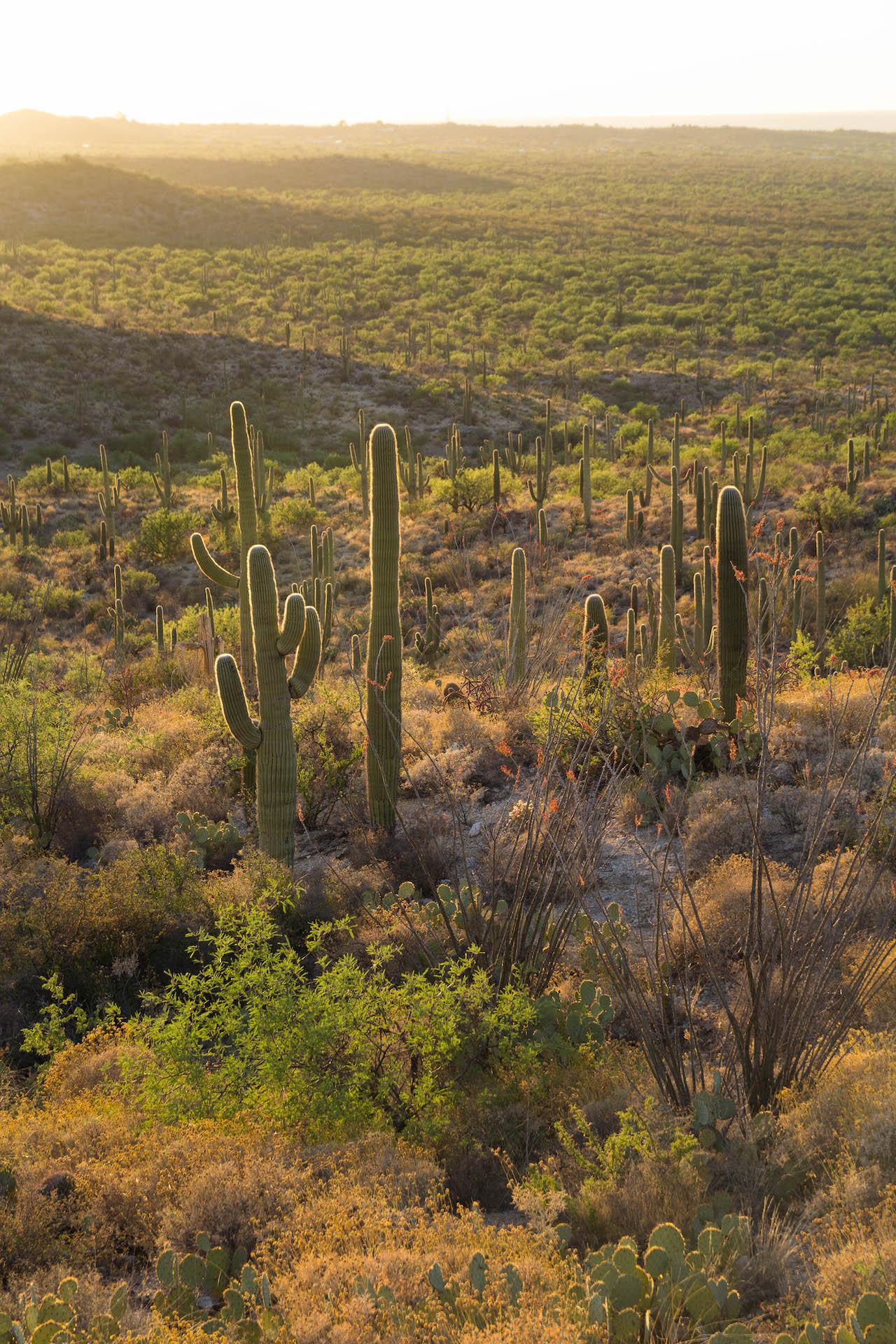 Saguaro NP_edited-15.jpg
