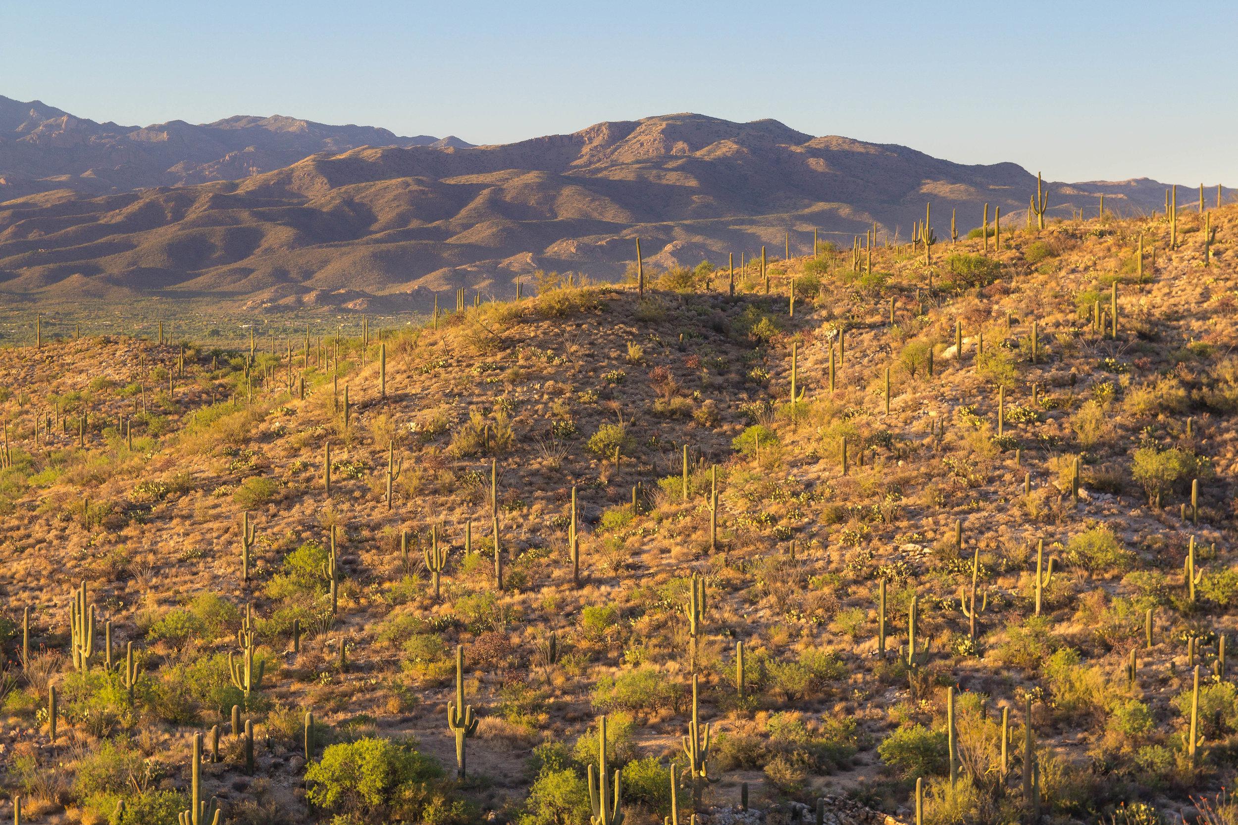 Saguaro NP_edited-14.jpg