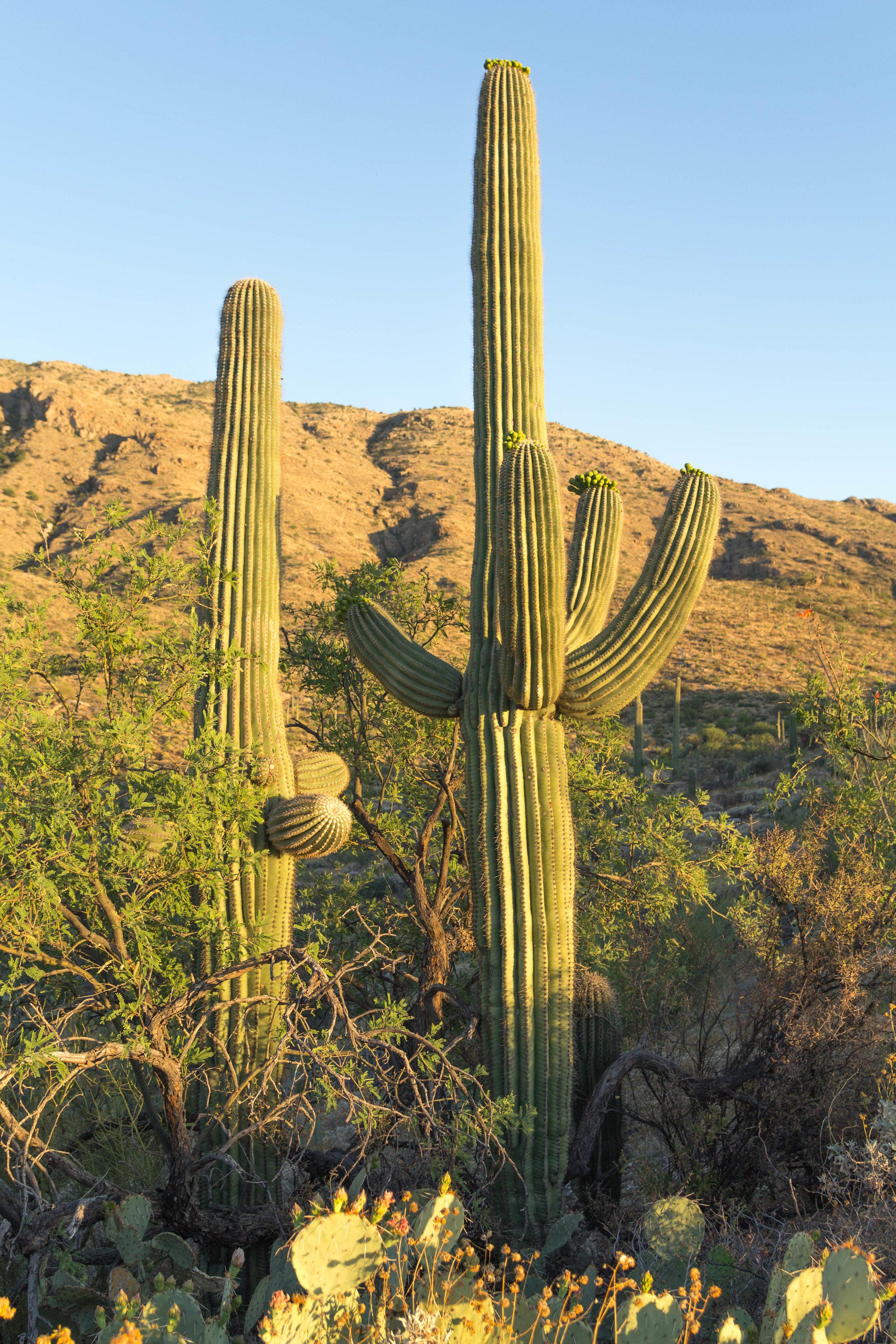 Saguaro NP_edited-17.jpg