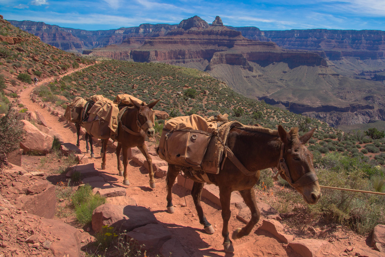Traffic Along the South Kaibab Trail, South Rim