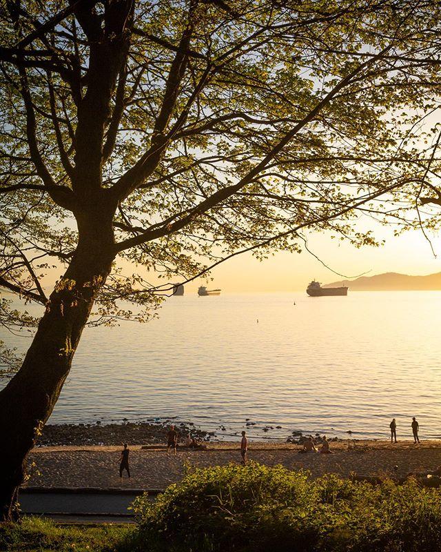Golden hour ✨ . . . . . #thankyoucanada #explorecanada #vancity #vancouver #vancouverbc #hellobc #explorebc #thirdbeach #vancityhype #vancouverisawesome #narcityvancouver #veryvancouver #igersvancouver #curiocityvan #dailyhivevan #beautifulbc #wandervancouver #yvr #vancitybuzz #604 #cityofvancouver #vancouverofficial #photography #goldenhour #sunset #beach #westcoast