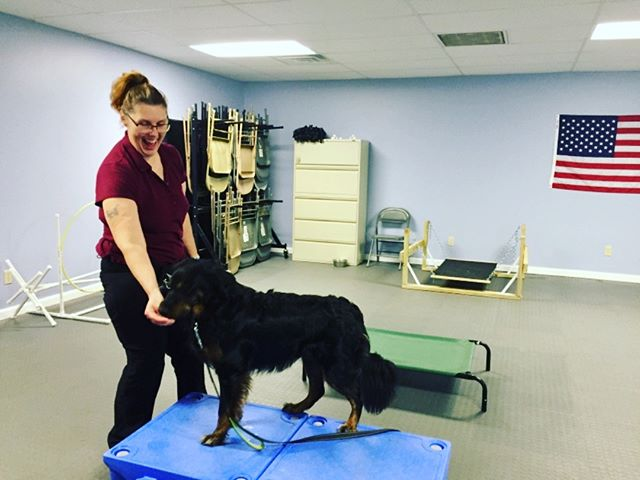 Confidence building can't be stressed enough for our dogs. When you have full access to the community you never know what you will encounter. Here is SDIT Sadie jumping up on the Climb for the first time. Love the proud look on her veterans face!  #proud #gooddog #servicedogteam #servicedogsofinstagram #blackdog #shelterdogs #ptsd #supportourveterans #marines #keepupthegoodwork #518 #518dogs