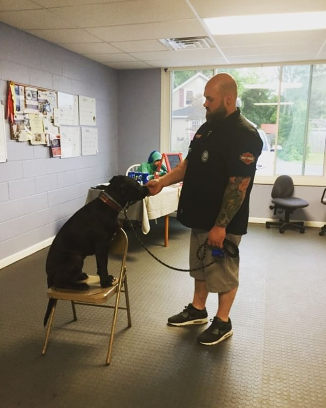 Today Luna learned sit 😂 #gooddog #dogsofinstagram #blackdog #shelterdog #servicedogtraining #servicedog #ptsd #army #lovethem