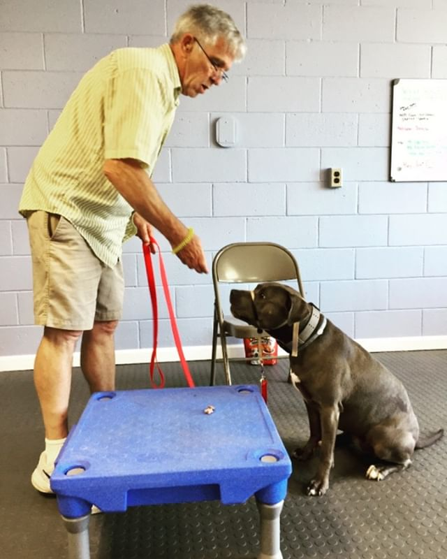 Leave it is one of the first things our dogs learn in class (its also one of the easiest things to teach and very versatile!). As service dogs they will have public access anywhere their human goes and its important they know not to touch things. Great job to Bill and SDIT Luna, massive improvement from last week!  #keepupthegoodwork #servicedog #servicedogtraining #veterans #vietnamveteran #518 #518dogs #oaeproud #thebestisyettocome #servicedogsofinstagram