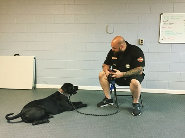 I feel like every picture of Travis and Luna looks like they are deep in conversation. Last nights topic was probably how they crushed their Canine Good Citizen test! Congrats to them!  #congratulations #blackdog #shelterdog #ptsd #ptsdservicedog #servicedog #servicedogintraining #servicedogsofinstagram #armyveteran #caninegoodcitizen #518 #518dogs #keepitup #proud #oaeproud