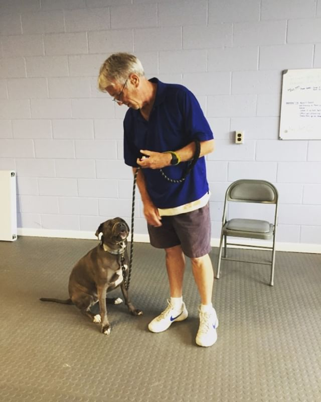 Luna is the perfect Pit Bull ambassador! Glad that this girl isn't sitting in the shelter anymore, instead she is helping Vietnam veteran Bill with his symptoms from post traumatic stress and light mobility. Helping veterans, saving dogs, changing lives... it's what we do 😎 #itswhatwedo #pitbull #pitbullsofinstagram #stopthestigma #vietnamveteran #ptsd #servicedogintraining #disabledveteran #teamwork #518 #518dogs #proud