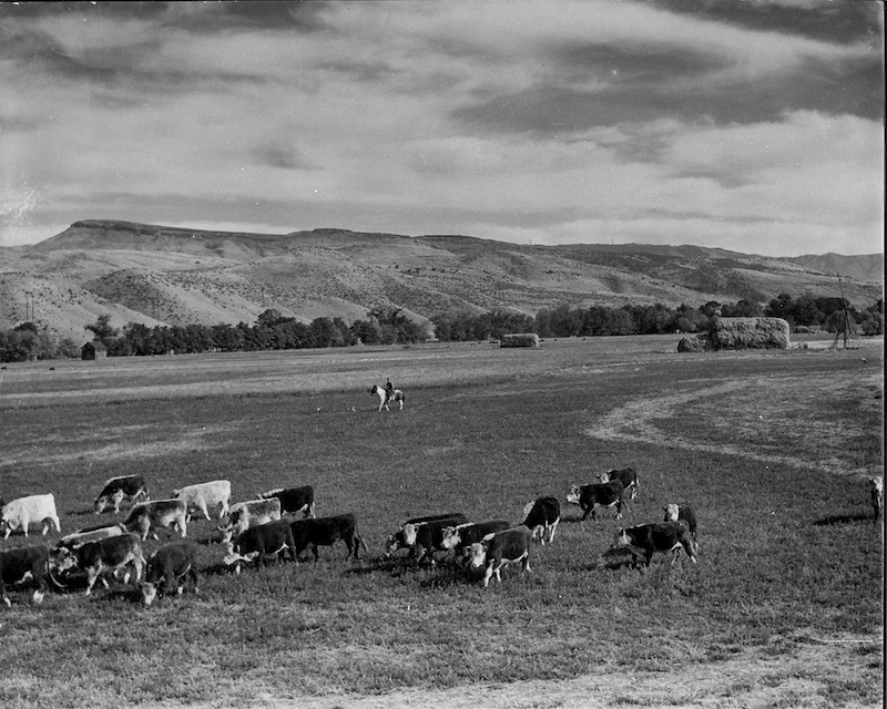 Dry Creek Ranch 1, c. 1950s.jpg