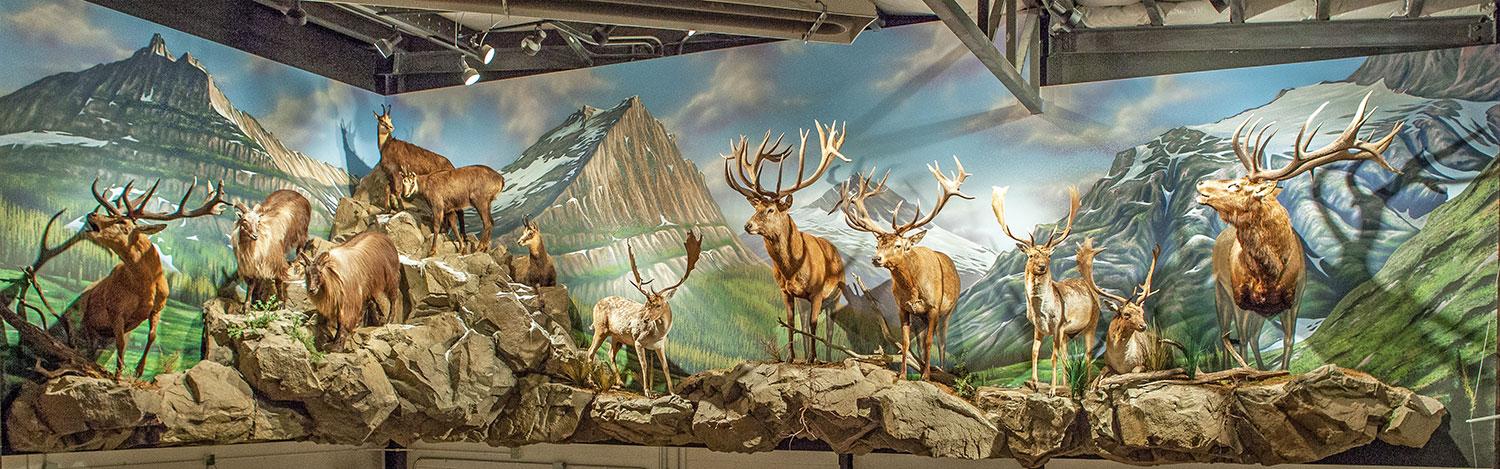 Mural Diorama on Location for Private Residence