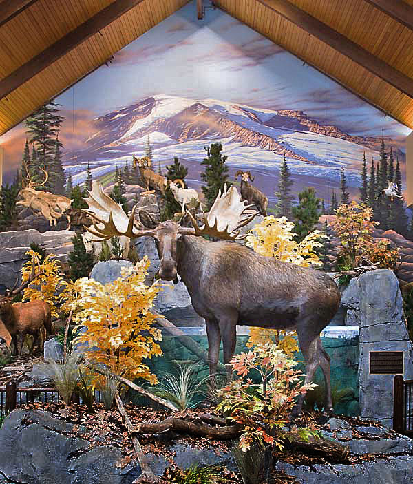 Mural Diorama on location for Corporate Sporting Goods Chain