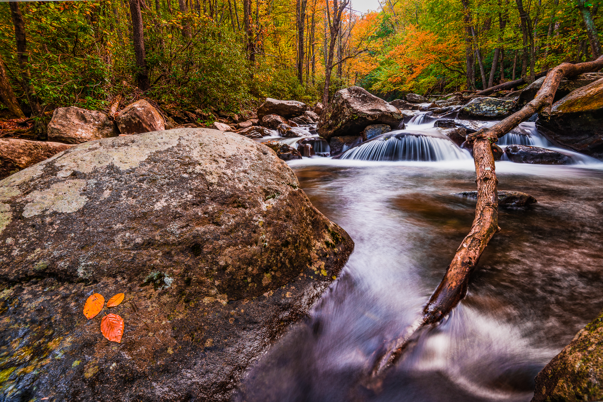 Trifecta. (Water, Fall, Leaves)