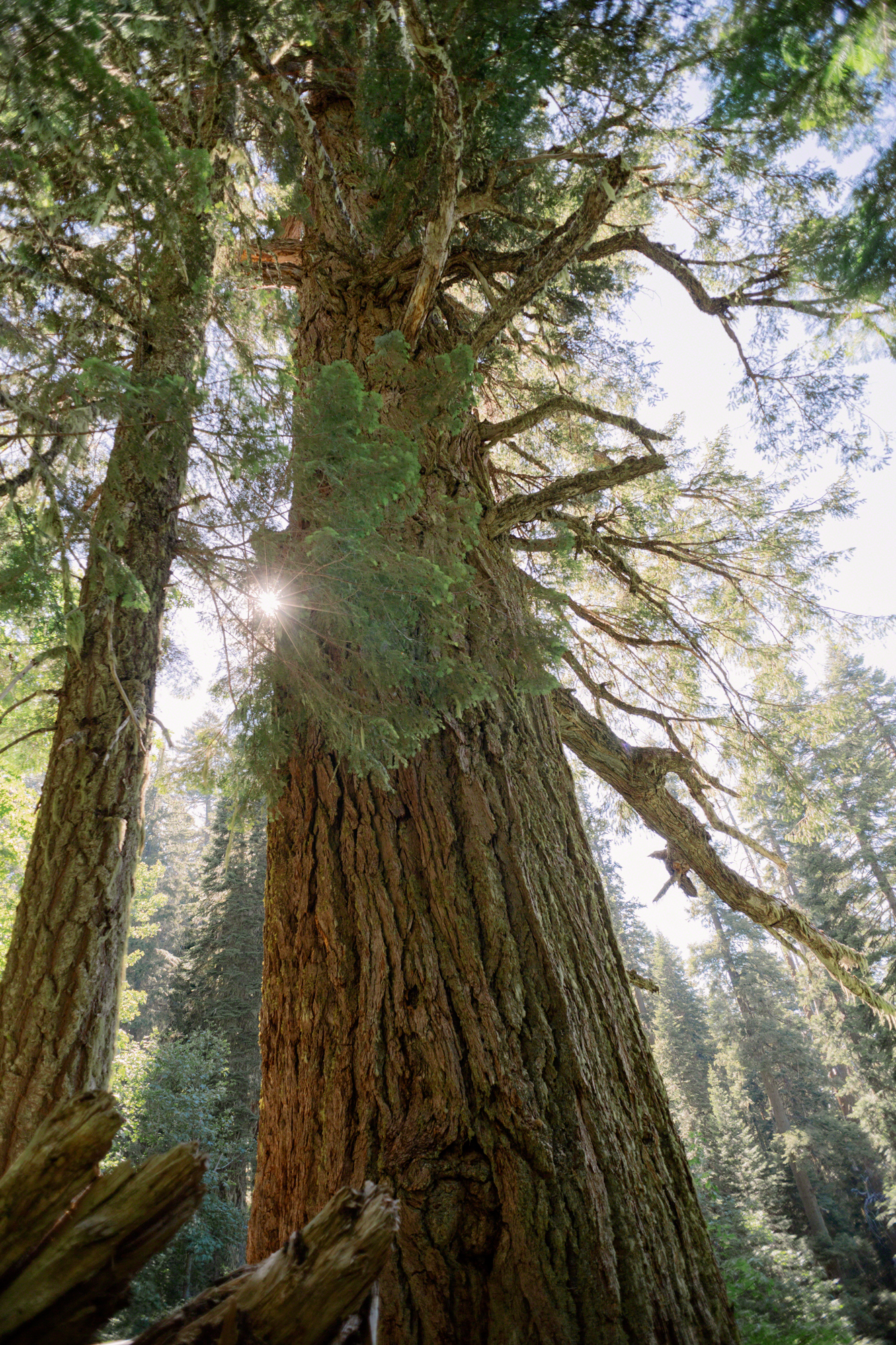 The-Big-Tree.jpg