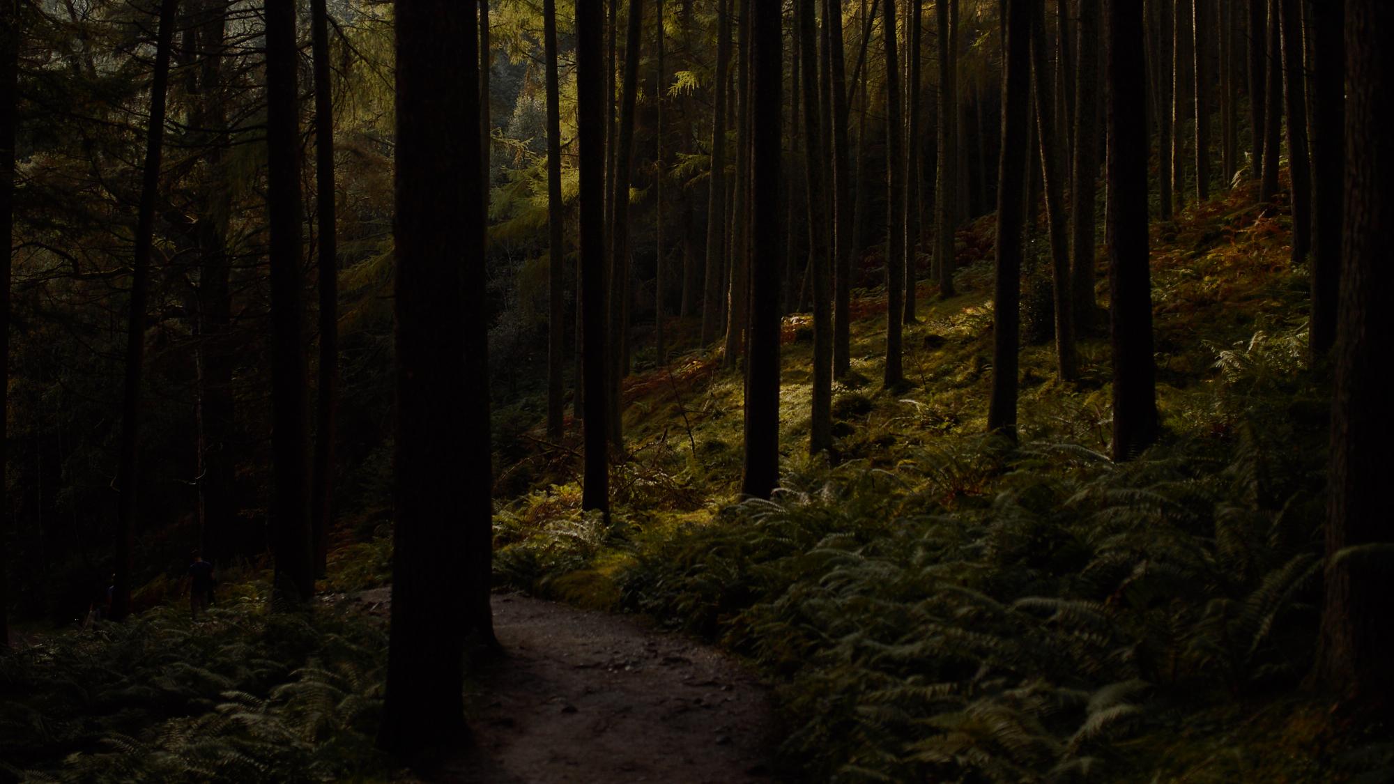Loch Lomond Wald